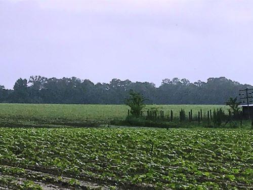 Humphrey Farm : Bainbridge : Decatur County : Georgia