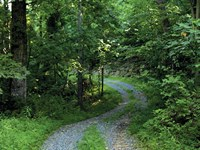 Land Auction 415 Ac Of Timberland : Bedford : Bedford County : Virginia