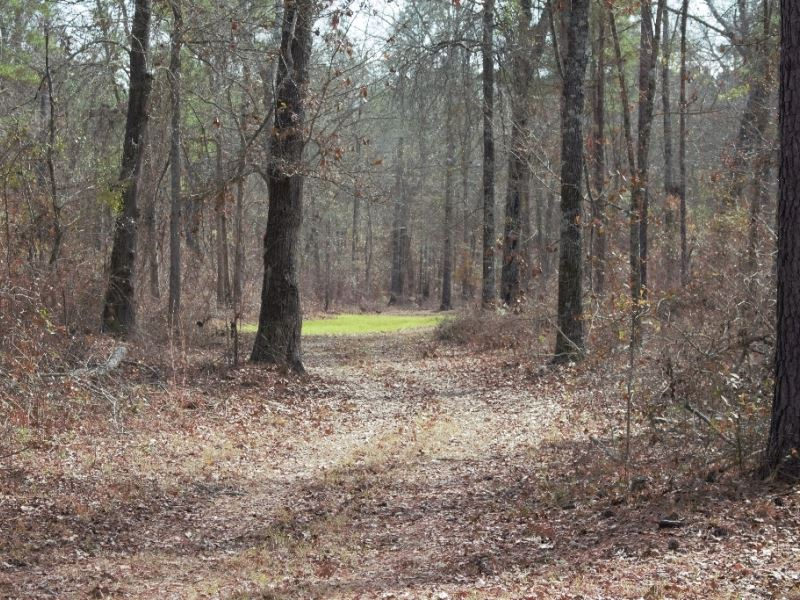 Reduced Again, Must See Hunting Re : Vienna : Dooly County : Georgia