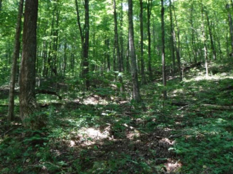 35 Unrestricted, Wooded Acres : Livingston : Overton County : Tennessee