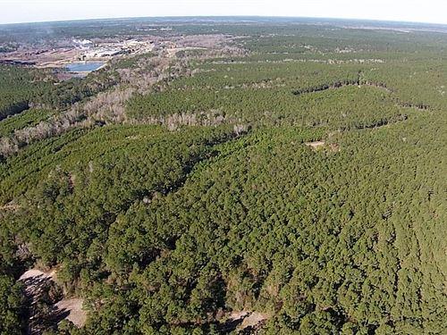 32 Acres Fm 942 : Camden : Polk County : Texas