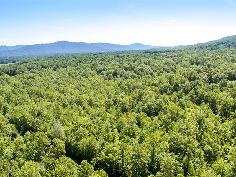 314 Acres On The Cumberland Plateau Farm For Sale Wartburg Morgan County Tennessee