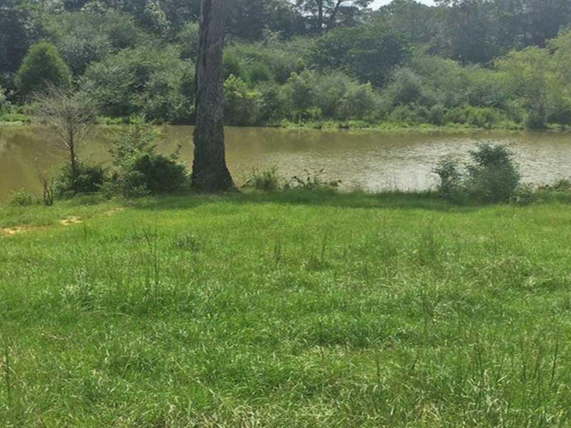 Sunny Brook Farm Tract : Dozier : Crenshaw County : Alabama