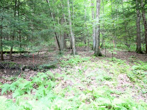 22 Acres Hunting Recreational Land : Jersey Shore : Lycoming County : Pennsylvania