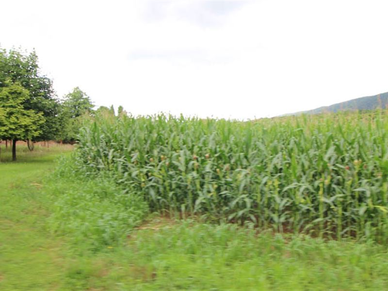 16 Acres Land In Nescopeck : Nescopeck : Columbia County : Pennsylvania