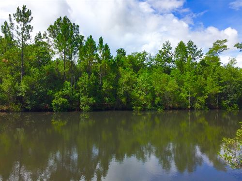 Reduced Timber/Homesite Carrabelle : Carrabelle : Franklin County : Florida