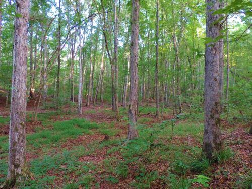 Hardwood Hunting Tract : Union Point : Greene County : Georgia
