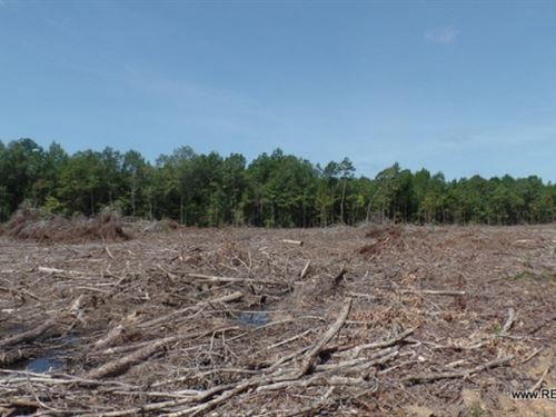 21.4 Ac - Cleared Timberland For Ru : Burkeville : Newton County : Texas