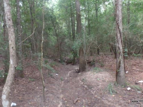 23 Ac - Wooded Tract For Home Site : Newton : Texas