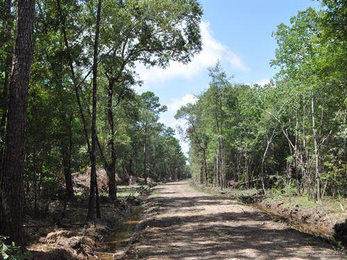 661 Acres Belvil Wright Rd : Batson : Hardin County : Texas