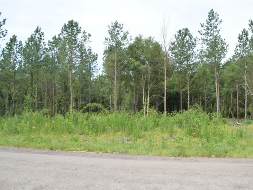 16 Wooded Acres In Npsd : Ruth : Pike County : Mississippi