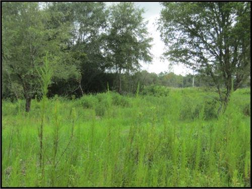 230 Acres In Harrison County : Lizana : Harrison County : Mississippi