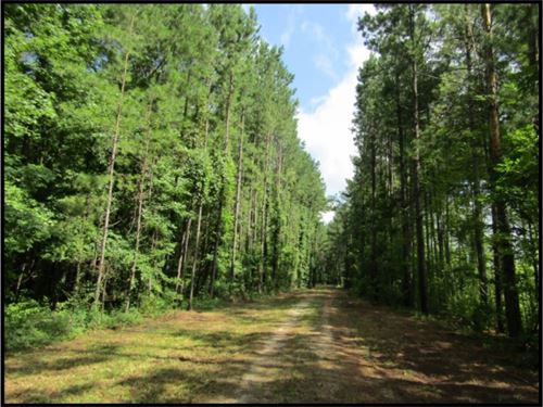 883 Acres In Jasper County : Bay Springs : Jasper County : Mississippi