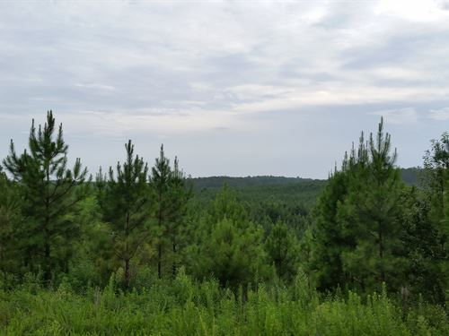 198+/- Acres Timberland In Tnf : Delta : Cleburne County : Alabama