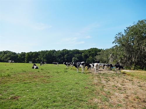 Trenton Ranch And Investment : Trenton : Gilchrist County : Florida
