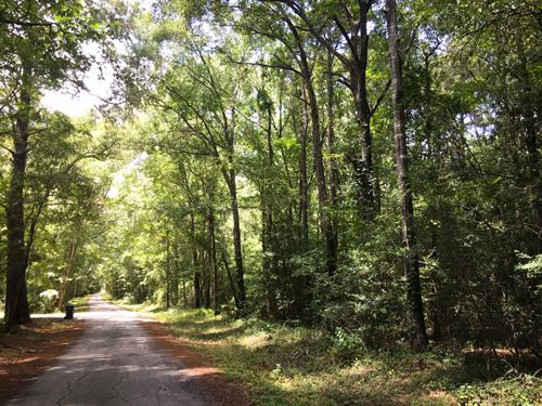 55 Acres Medley Road : New Waverly : Montgomery County : Texas