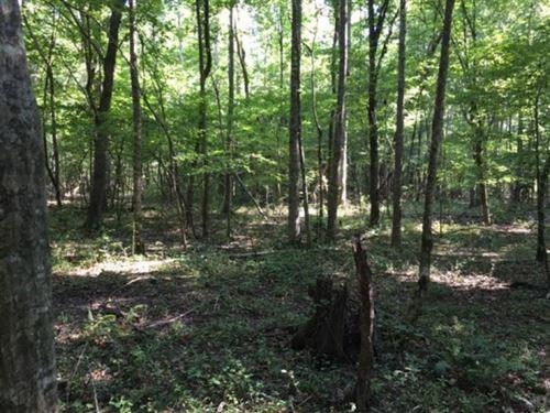 17.15 Acres In Rankin County : Brandon : Rankin County : Mississippi
