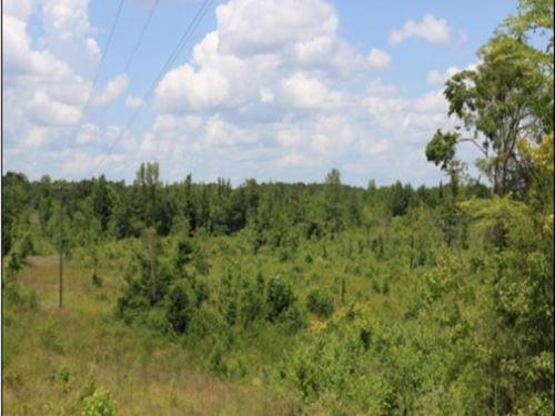 36 Acres In West Neshoba County : Philadelphia : Neshoba County : Mississippi