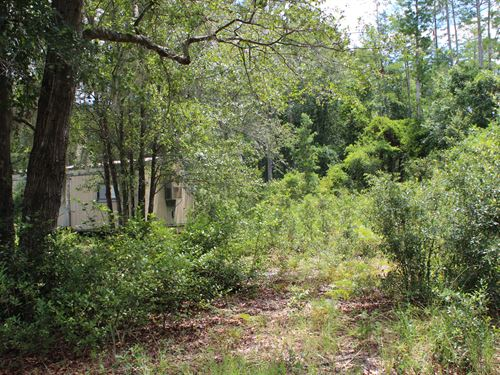 Hunting Camp : Perry : Taylor County : Florida