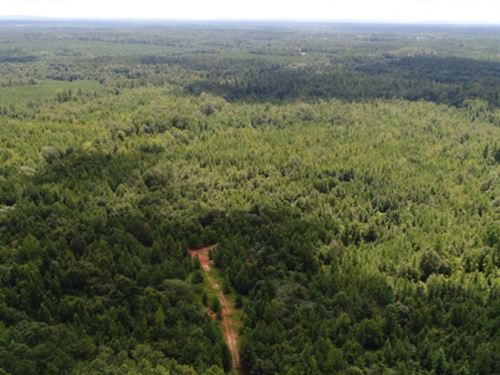 131.61 Ac Trammell Bottom Rd. : Greenville : Meriwether County : Georgia