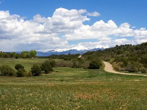 Hunting Land Near Durango : Mancos : Montezuma County : Colorado