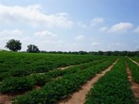Harrell Farms : Americus : Sumter County : Georgia