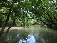 95 Acres, Hardwoods & Large Creek : Ashville : Saint Clair County : Alabama