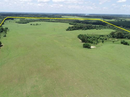 1370 Acres Cattle Farm, Timber Land : Preston : Webster County : Georgia
