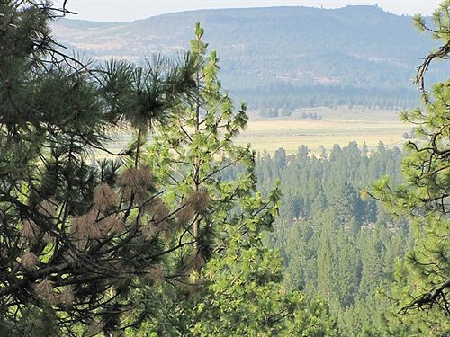 Homesites, Timber, And Mule Deer : Sprague River : Klamath County : Oregon