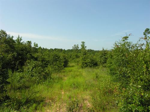 Price Reduced 249 Acres Wooded : Preston : Webster County : Georgia