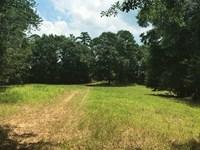 A Treasure Forest In Alabama : Jackson : Clarke County : Alabama