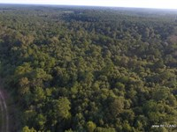 73.4 Ac - Timberland & Hunting : Jasper : Jasper County : Texas