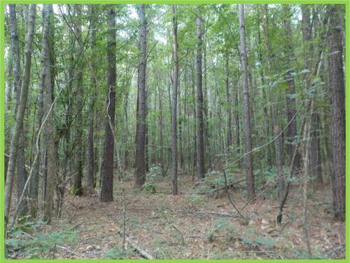 40 Acres In Noxubee County : Shuqualak : Noxubee County : Mississippi