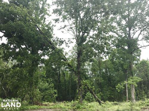 Effingham Home Sites : Effingham : Florence County : South Carolina