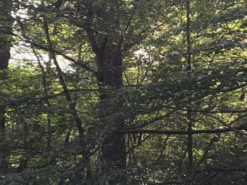 Springbank Timber Tract : Chatom : Washington County : Alabama