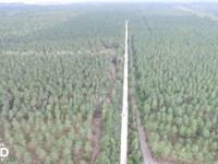 Burgaw Hunting And Timber Investmen : Burgaw : Pender County : North Carolina