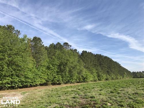 Hwy 462 Timber And Future Homesite : Ridgeland : Jasper County : South Carolina