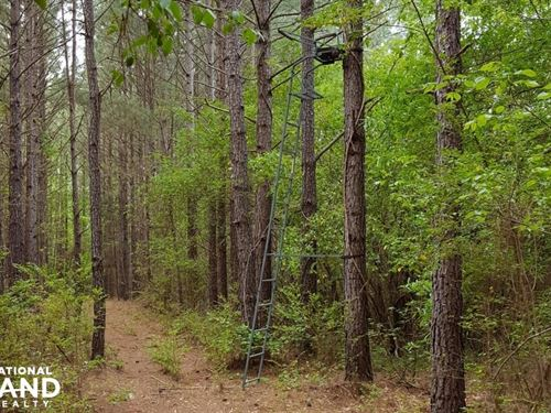 Timber Investment With Excellent Hu : Anderson : South Carolina