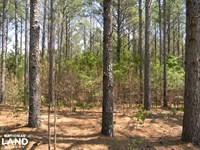 County Road 15 Timber & Hunting Tra : Maplesville : Chilton County : Alabama