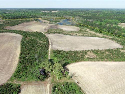 Lynches River Farm And Hunting Esta : Maysville : Lee County : South Carolina