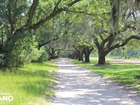 Wadmalaw Island 9.5 Acres : Wadmalaw Island : Charleston County : South Carolina
