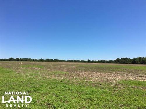 Aiken County Farmland : Wagener : Aiken County : South Carolina