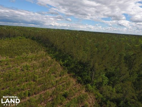 Jones 9 Acre Timber Tract : Comfort : Jones County : North Carolina