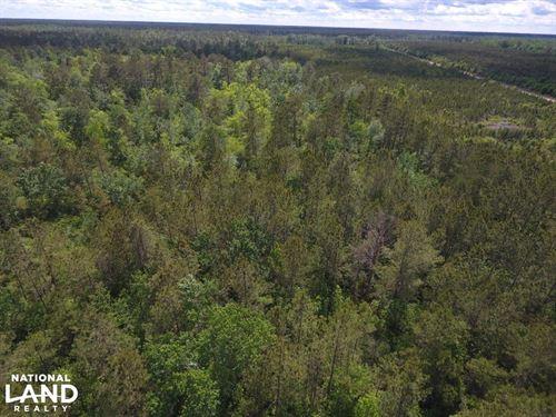 Jones 15 Acres Prime Hunting Land : Comfort : Jones County : North Carolina