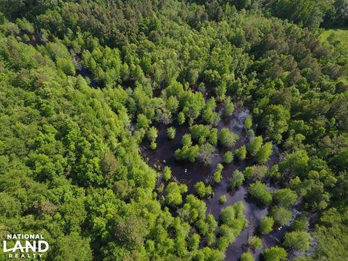Jones 48 Acre Hunting Tract : Comfort : Jones County : North Carolina
