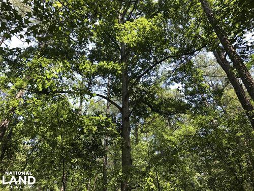 Panola Mountain State Park Property : Stockbridge : Rockdale County : Georgia