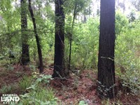 53.7 Acres - Hunting & Timber Inve : Terry : Hinds County : Mississippi