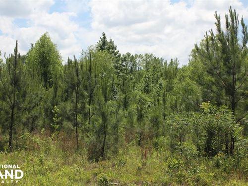 Hwy 17 Homesite, Campsite, Hunting : Sulligent : Lamar County : Alabama