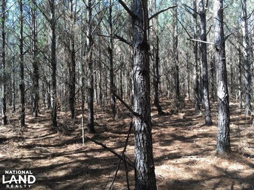 Winston County 80 Acre Pine Plantat : Louisville : Winston County : Mississippi