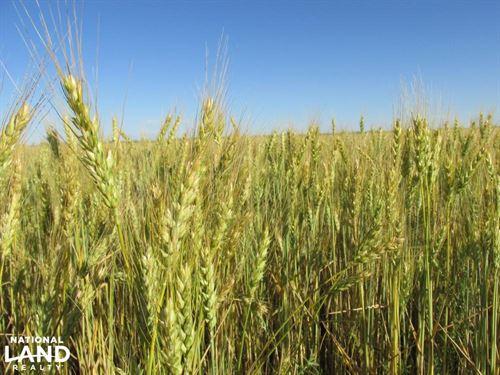 Farm Ground For Sale - Kit Carson : Seibert : Kit Carson County : Colorado